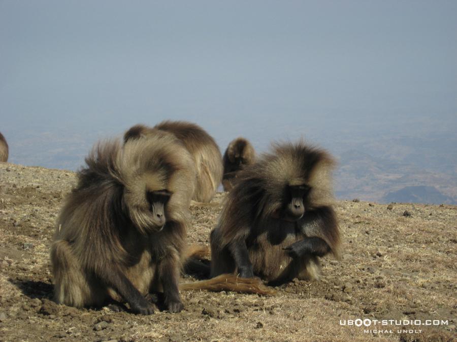 zdjecia-podroznicze-etiopia-6